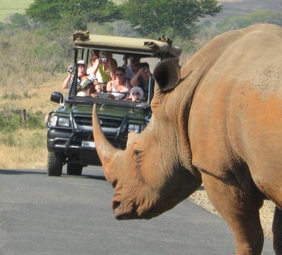 Game Drive, Hluhluwe/Imfolozi Game Reserve