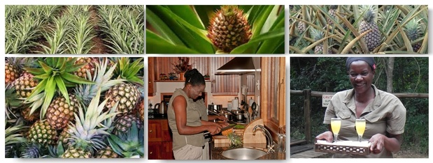 Pineapple Facts and Bushwillow food in Hluhluwe