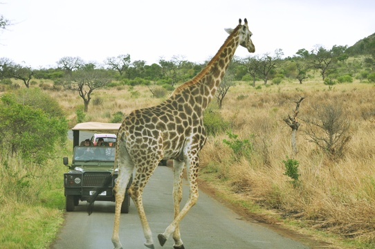 Game Drives, Hluhluwe/Imfolozi Game reserve
