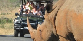 Rhino in Hluhluwe Imfolozi with Bushwillow guests